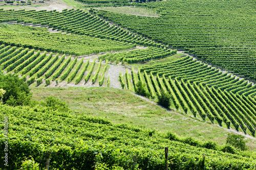 Papiers peints Vignoble vineyars near Barbaresco, Piedmont, Italy