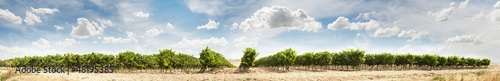 Foto op Canvas Beige Vineyards panoramic image