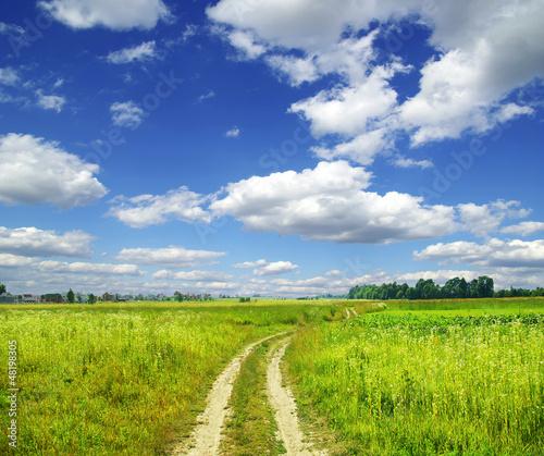 Fotobehang Bleke violet field