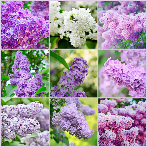Tuinposter Lilac Lilac collage