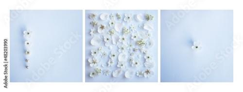 Fototapeta kwiat tło ślub kwiaty świeże zaproszenie biały niebieski wiosna obraz