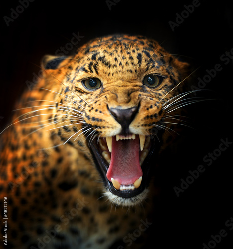 Canvas Prints Leopard Leopard