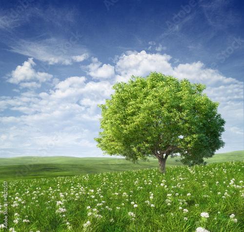 Foto-Kissen - Summer landscape with green tree
