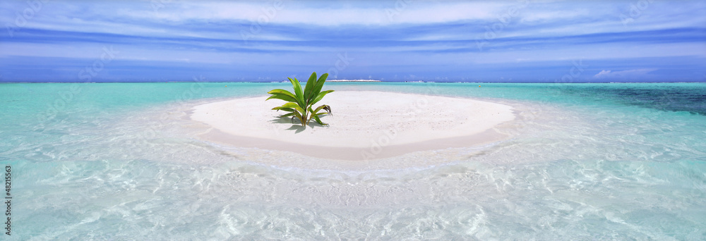Fototapeta Tropical island with palm