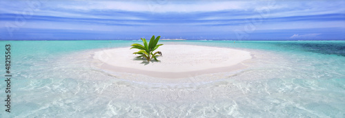 Ingelijste posters Eiland Tropical island with palm