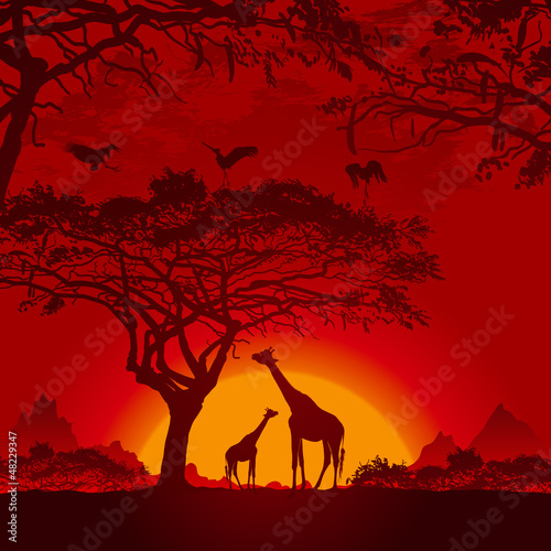 Photo  African sunset