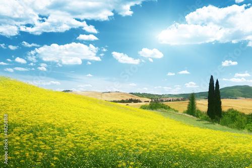 Poster Jaune field of yellow flowers Tuscany, Italy