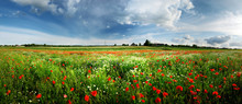 A Poppy Field And A Country Vi...