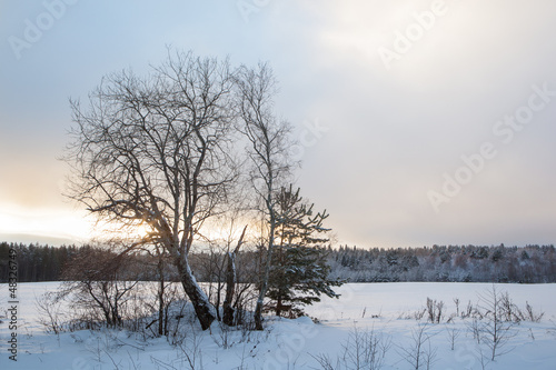 Fototapety, obrazy: Trees on a winter snow-covered field.