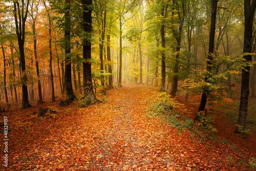 jesienny-mglisty-las