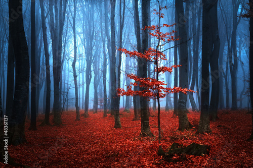 Papiers peints Rouge mauve Autumnal foggy forest
