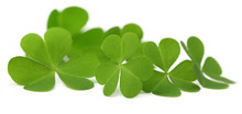 Decorative Clover Leaves Over ...