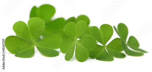 Decorative clover leaves over white background