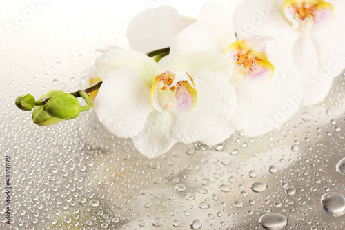 Fototapeta white beautiful orchid with drops obraz