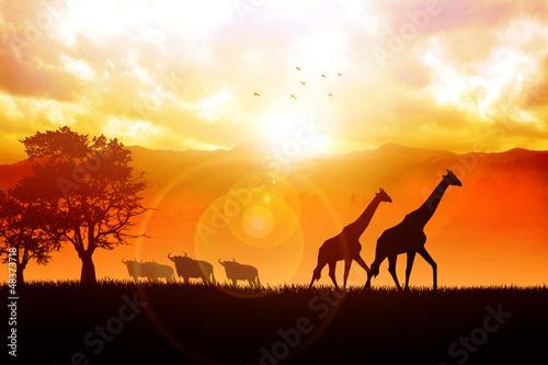 Foto-Flächenvorhang ohne Schienensystem - Silhouette illustration of African wildlife (von rudall30)