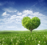 Fototapeta Fototapety z naturą - Tree in the shape of heart, valentines day background,
