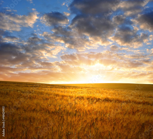 Fotografia sunset over wheat fields
