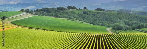 Poster de jardin Pistache Vista panoramica di un vigneto nella verde campagna toscana