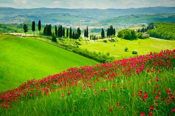 Fototapeta Inspiracje na lato Hill and cypresses