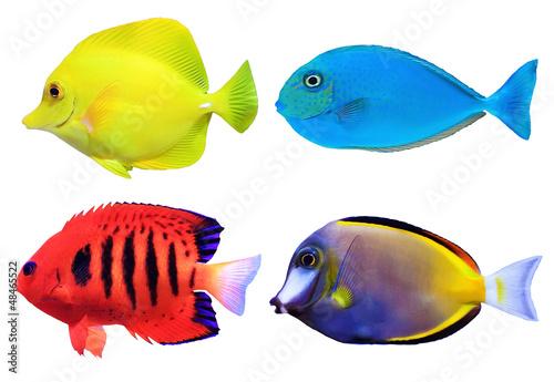 zestaw-tropikalnych-ryb-morskich
