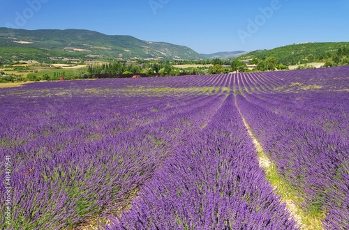 Tuinposter Lavendel Lavendelfeld - lavender field 33