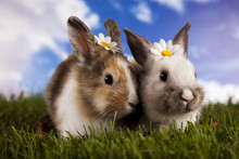 Spring Baby Bunny And Green Gr...