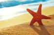 seastar on the sand of a beach