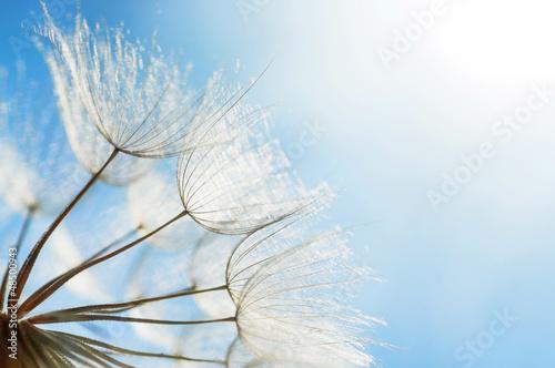 streszczenie-tlo-kwiat-mniszka-lekarskiego-zblizenie-z-nieostrosc