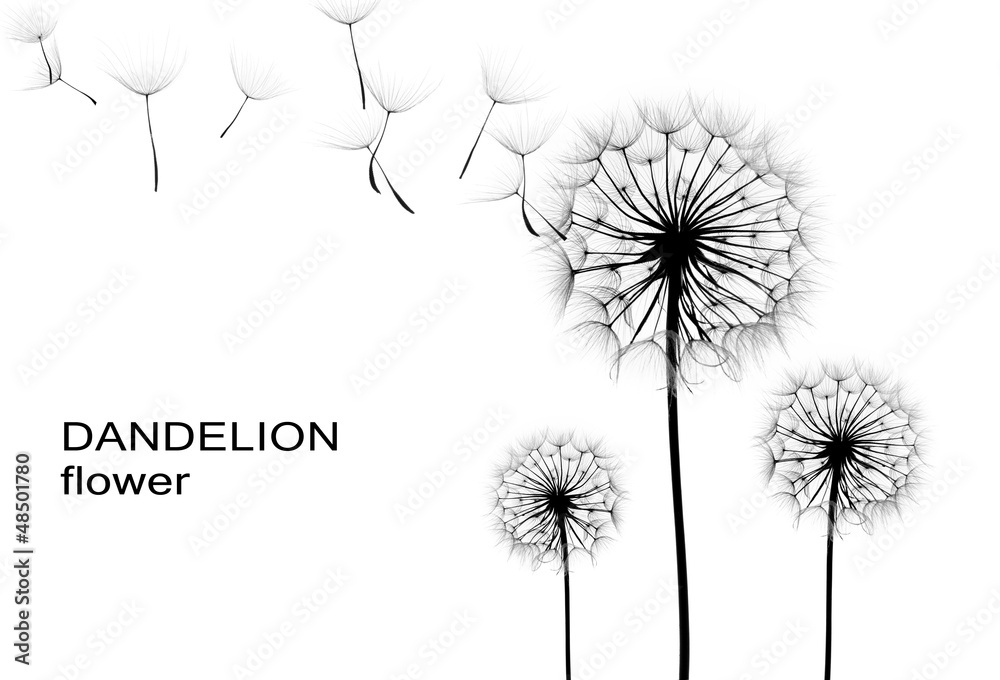Fototapety, obrazy: dandelion flower  on a white background, silhouette