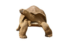 Gian Tortoise To Use For Retouche