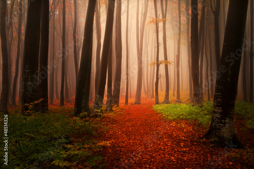 Foggy autumn morning in the forest