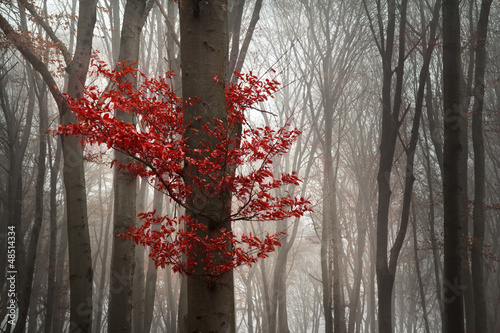 Foggy autumn morning in the forest - 48514334
