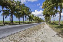 Palmenallee Mit Landstraße Auf Kuba