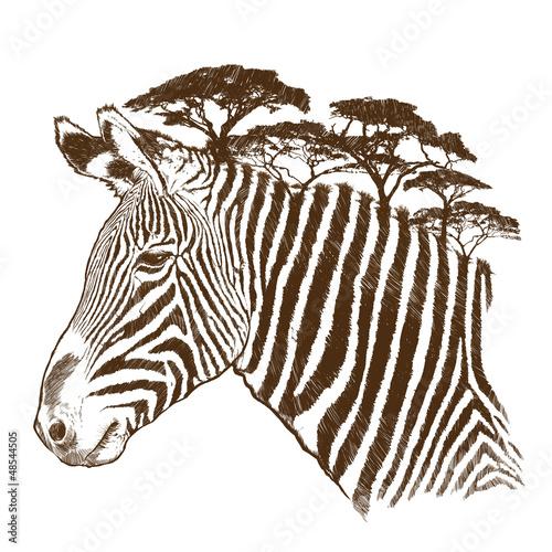 Zebra with tree - 48544505