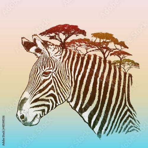 Evening savanna zebra - 48544506
