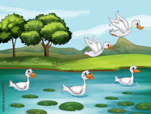 Fotobehang Rivier, meer Ducks and water