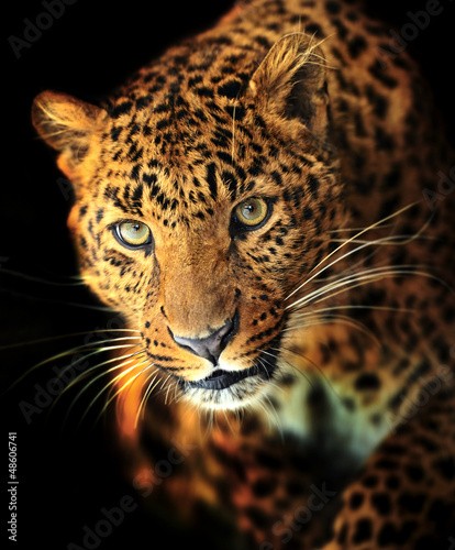 Photo Stands Leopard Leopard