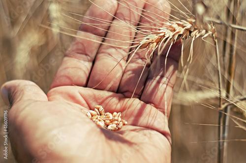 Fotografie, Obraz  alimento base