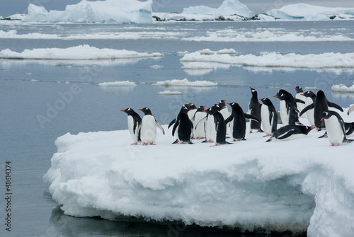 Tuinposter Pinguin Penguins on the ice.