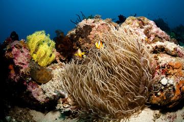 Fototapeta na wymiar Naturwunder Riff