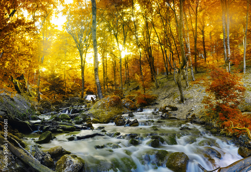 Autumn creek woods with yellow trees - 48643611