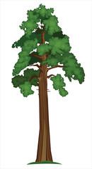 Vector Sequoia