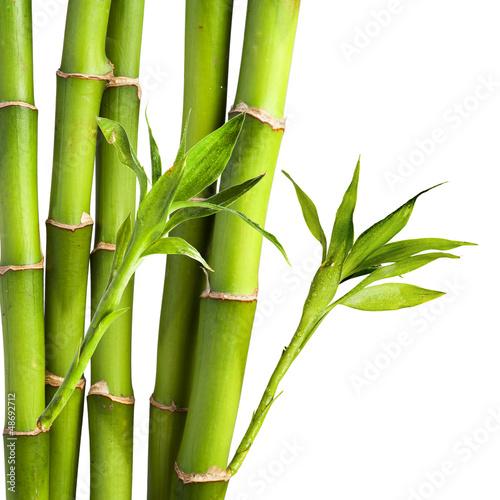 bambusowy-i-bambusowy-lisc-na-bialym-tle
