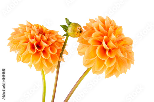 Photographie orange dahlia