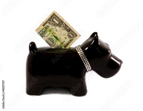 little dog moneybox Poster