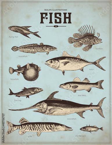 ilustracje-zycia-morskiego-ryba-1