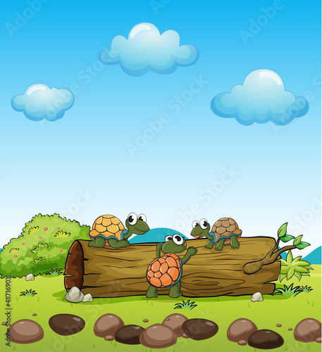 Poster de jardin Zoo Smiling turtles on a dry wood