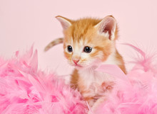 Pink Feathers Surrounding A Gi...