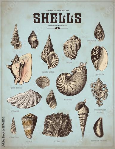 ilustracje-zycia-morskiego-muszle-1
