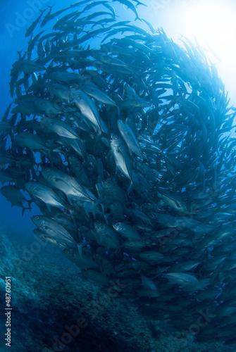 Papiers peints Recifs coralliens ギンガメアジの大群